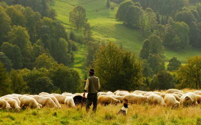 Náš Pastýř